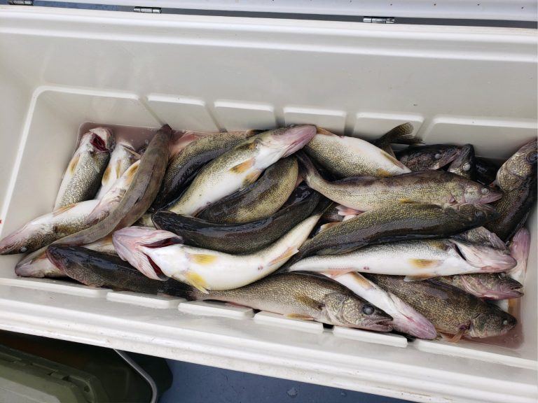 More Fish In Cooler 2019