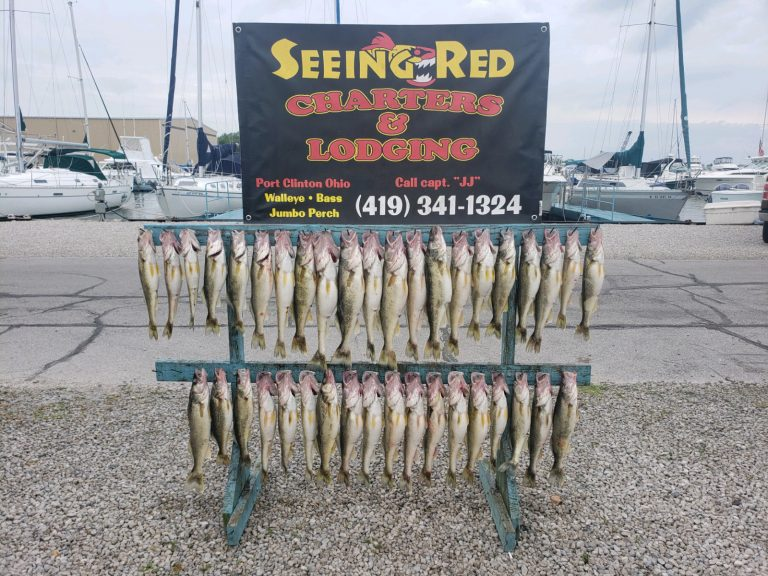 Lake Erie Walleye Charter Catch with Seeing Red Charters